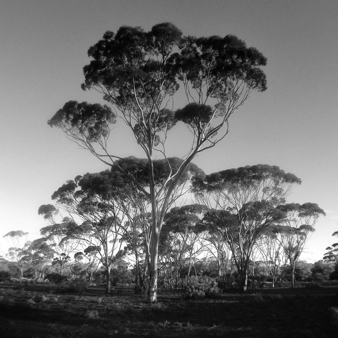 Just off the Great Eastern Highway, around 650km east of Perth.