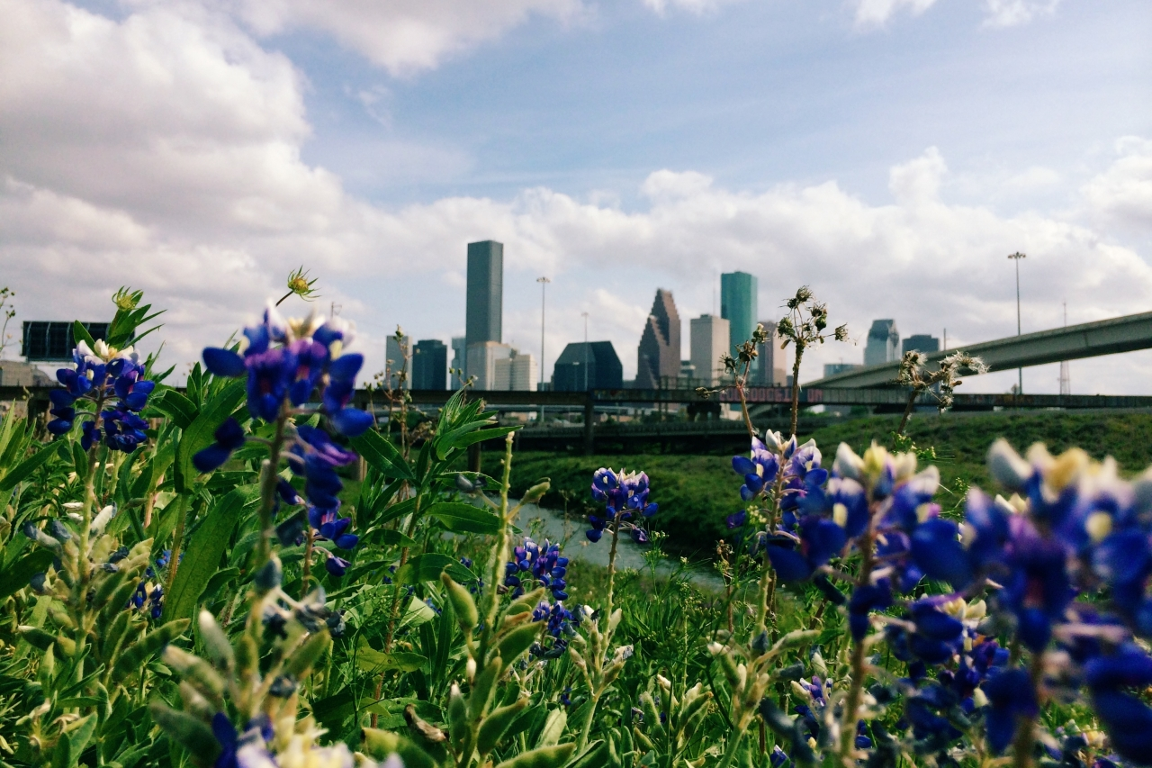 Day 5 - View <br /> <br /> Where the bluebonnets grow <br /> <br /> #21DaysWORLD #HoustonTX