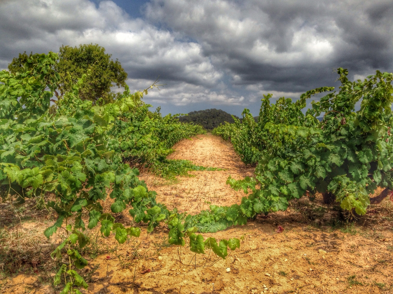 #21daysworld#ibiza day 16 road/path
