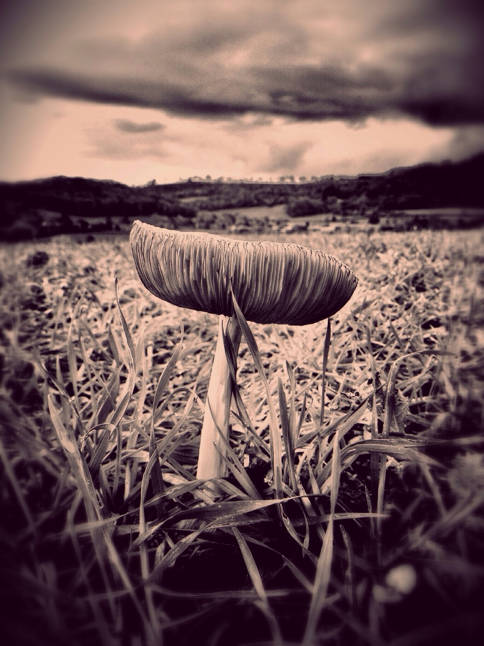 funghi , iPhone 4s , distressed fx , Pixlr , snapseed . Taken on a shropshire hillside .mobimono...