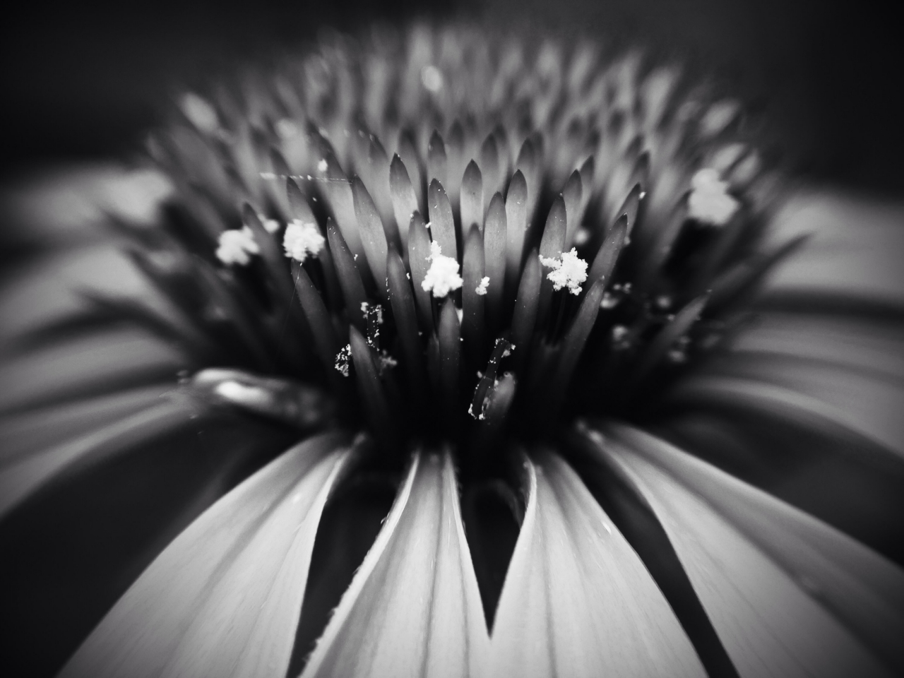 Iphone 6+ ,macro lens ,pro camera ,mattebox . MobiMono 112 ,by IPRuss