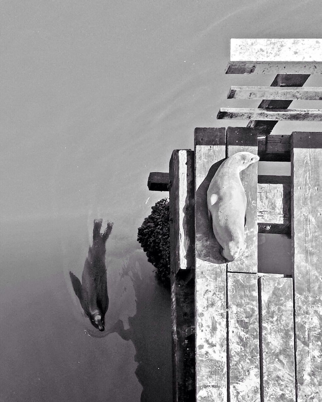 Young sea lions by terse ,iPhone 5s , MobiMono 120