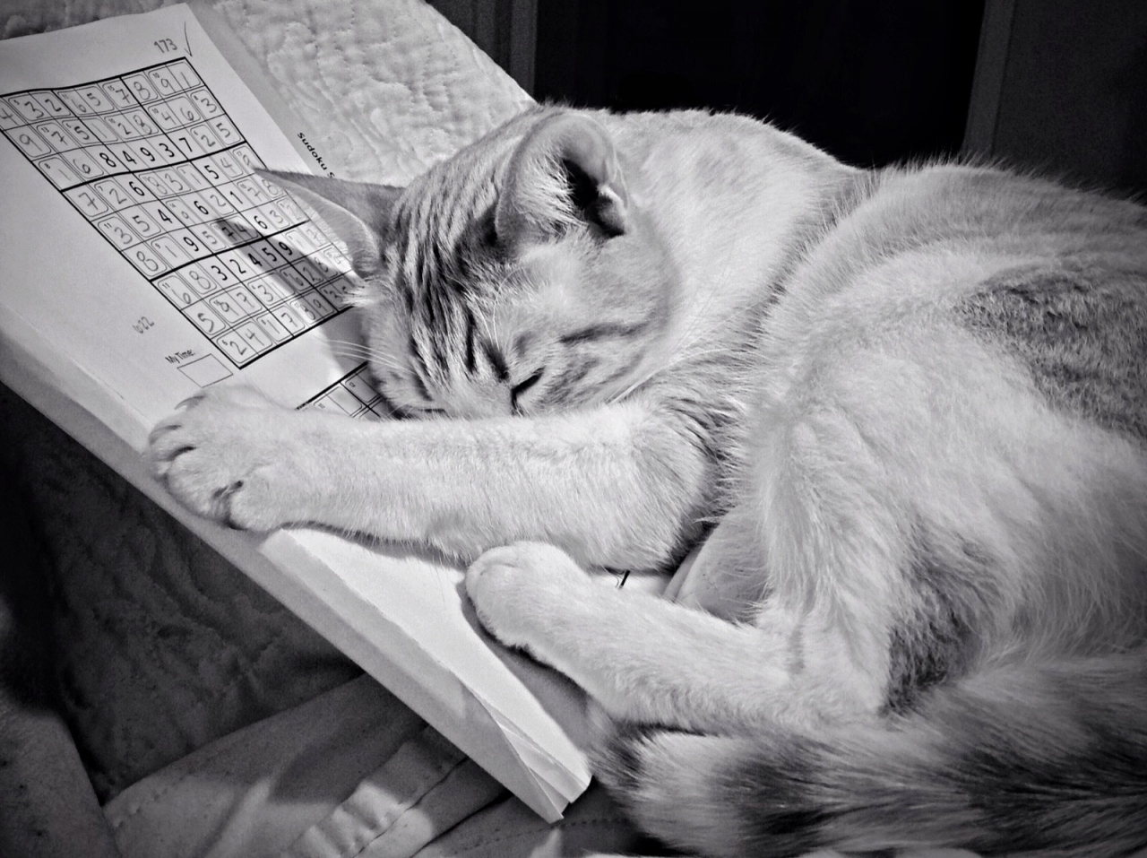 Relaxing with a Sunday puzzle ,by terse , iPad 4 , native cam and ACDSee , Mobimono 126