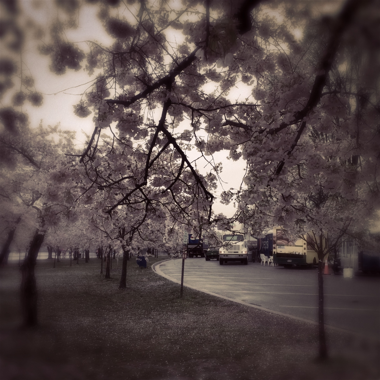 Truck behind the cherry blossoms<br /> <br /> iPhone 5S <br /> Hipstamatic - Sergio lens, Blanko...