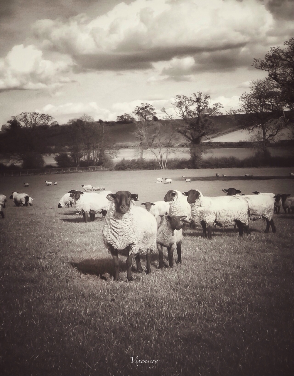 Lambing time by vixenscry, iPhone 4s ,snap seed and ps express , mobimono 129