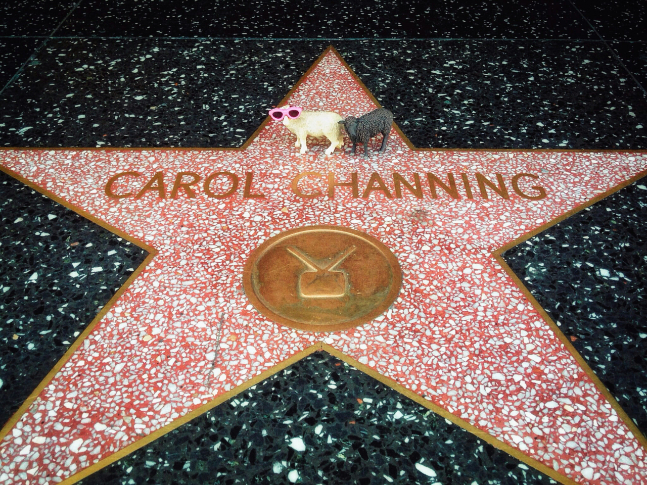 "In Hollywood, CA with <a href=""https://www.mobitog.com/members/6309/"" class=""username""..."
