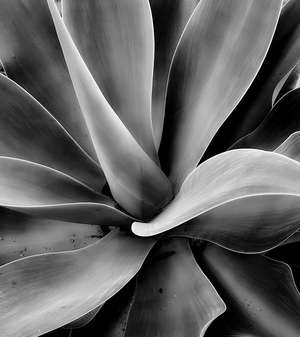 Same day, different Agave