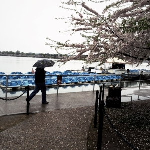 More umbrellas... and paddle boats