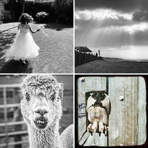 2020-2021 Image of the Month Winners