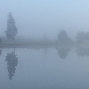 Misty morning on the creek